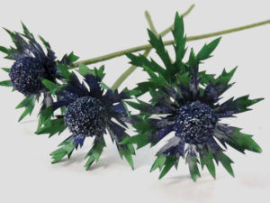 paper sea holly