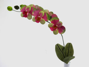 pink paper moth orchid