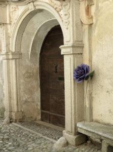 purple giant rose