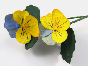 paper pansy