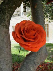 orange giant paper rose